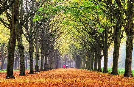 Amsterdam-Amsterdam Bos -