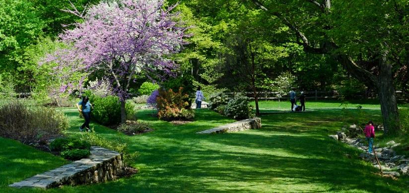 Arnold Arboretumu