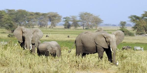 Dünyanın gizemli kıtası Afrika'nın sihirli bölgeleri