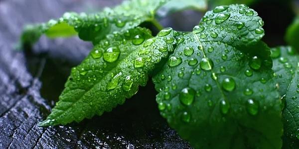 Sıcaklığı emerek evinizi serinleten 3 bitki