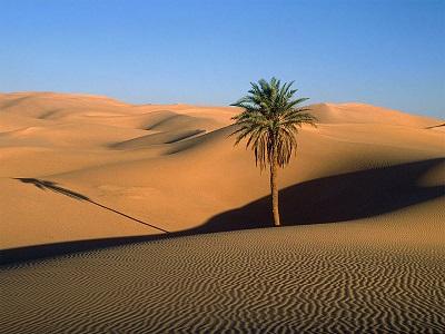 Kalahari Çölü-Güney Afrika