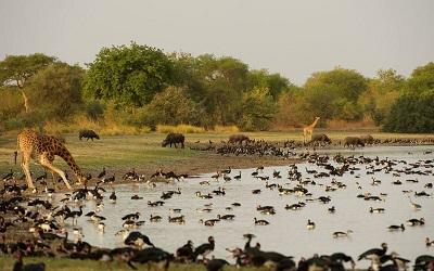 Zakouma Ulusal Parkı-Çad